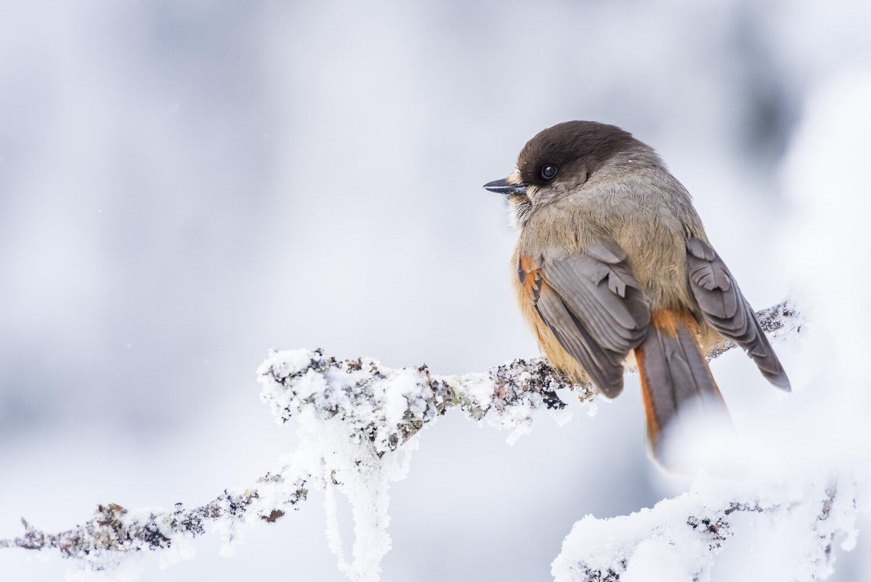 luontokuva-arkisto-kuukkeli-1500px.jpg