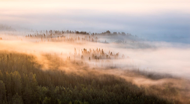 luontokuva-aamusumuja-1500px.jpg