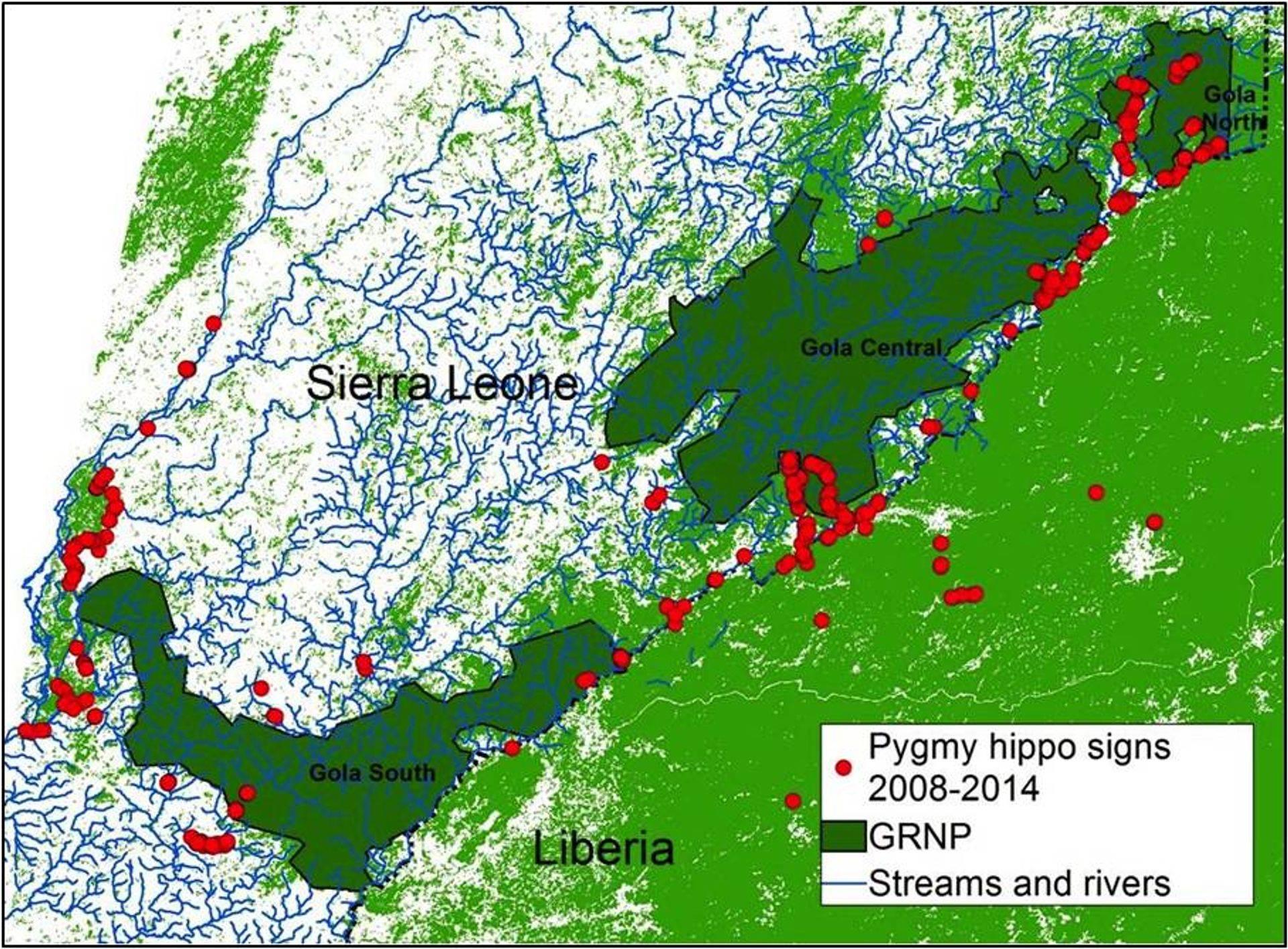 PygmyHippo research2.jpg