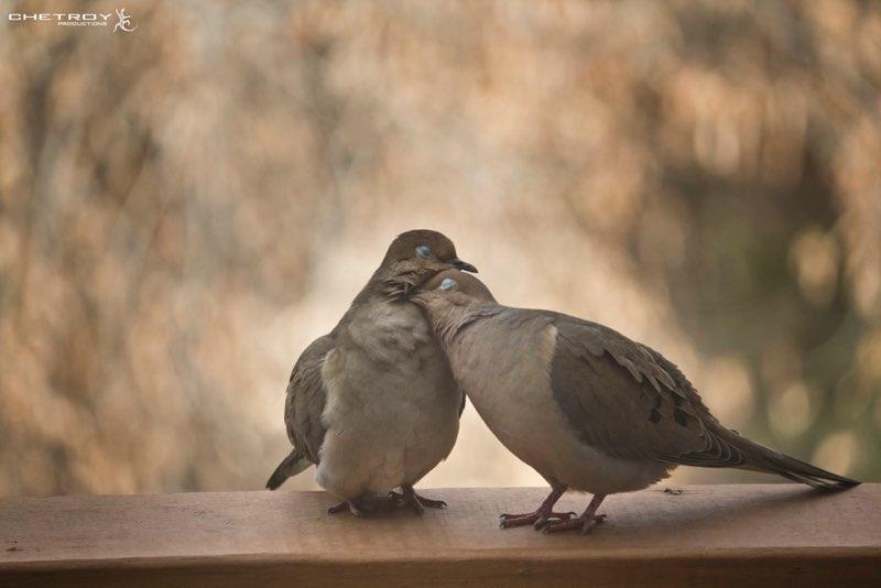 love doves.jpg