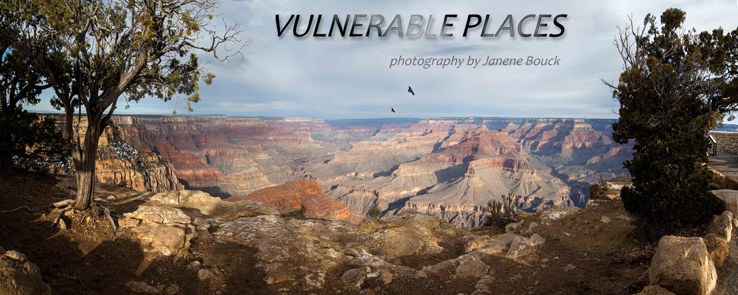 Vulnerable Places was displayed through the Art in Public Places Program, via  Saratoga Arts  - during  August in Saratoga  at the  Saratoga's Community Federal Credit Union ,  23 Division St, Saratoga Springs, New York.