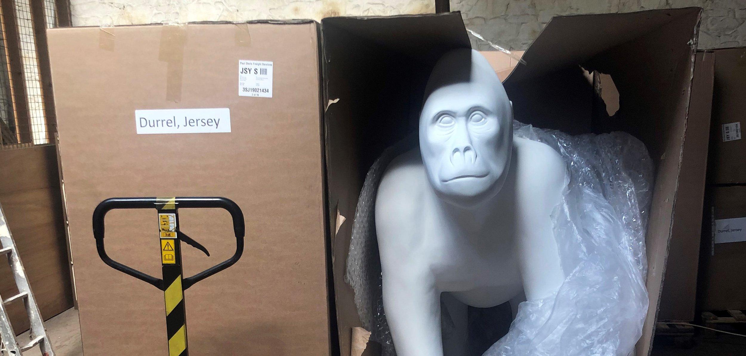 Gorillas_arrive_2.jpg