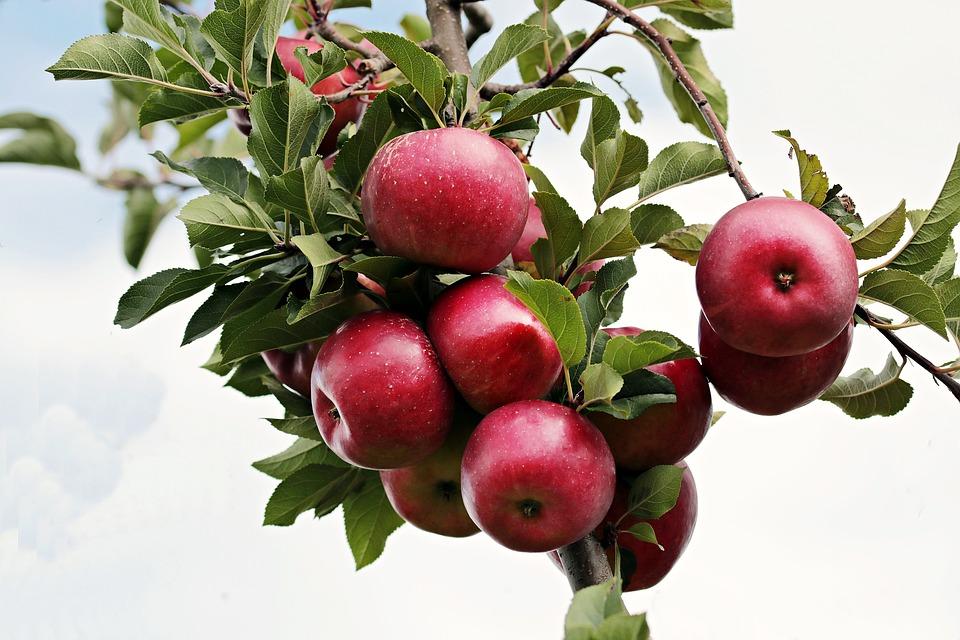 apple-2788599_960_720.jpg