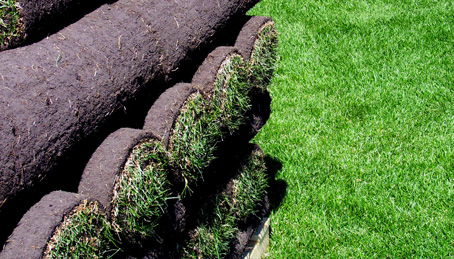 Sod Production