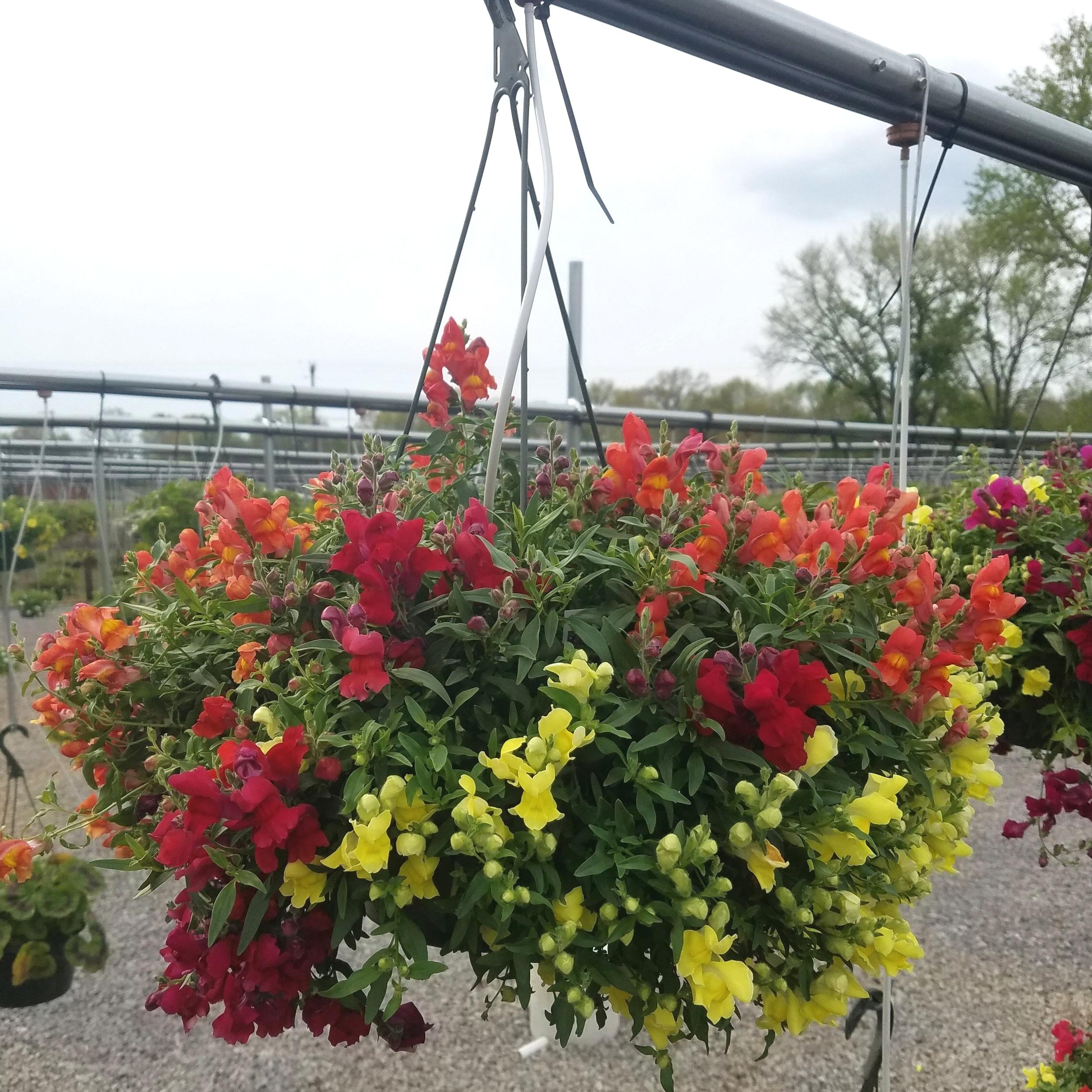 Hanging Baskets -