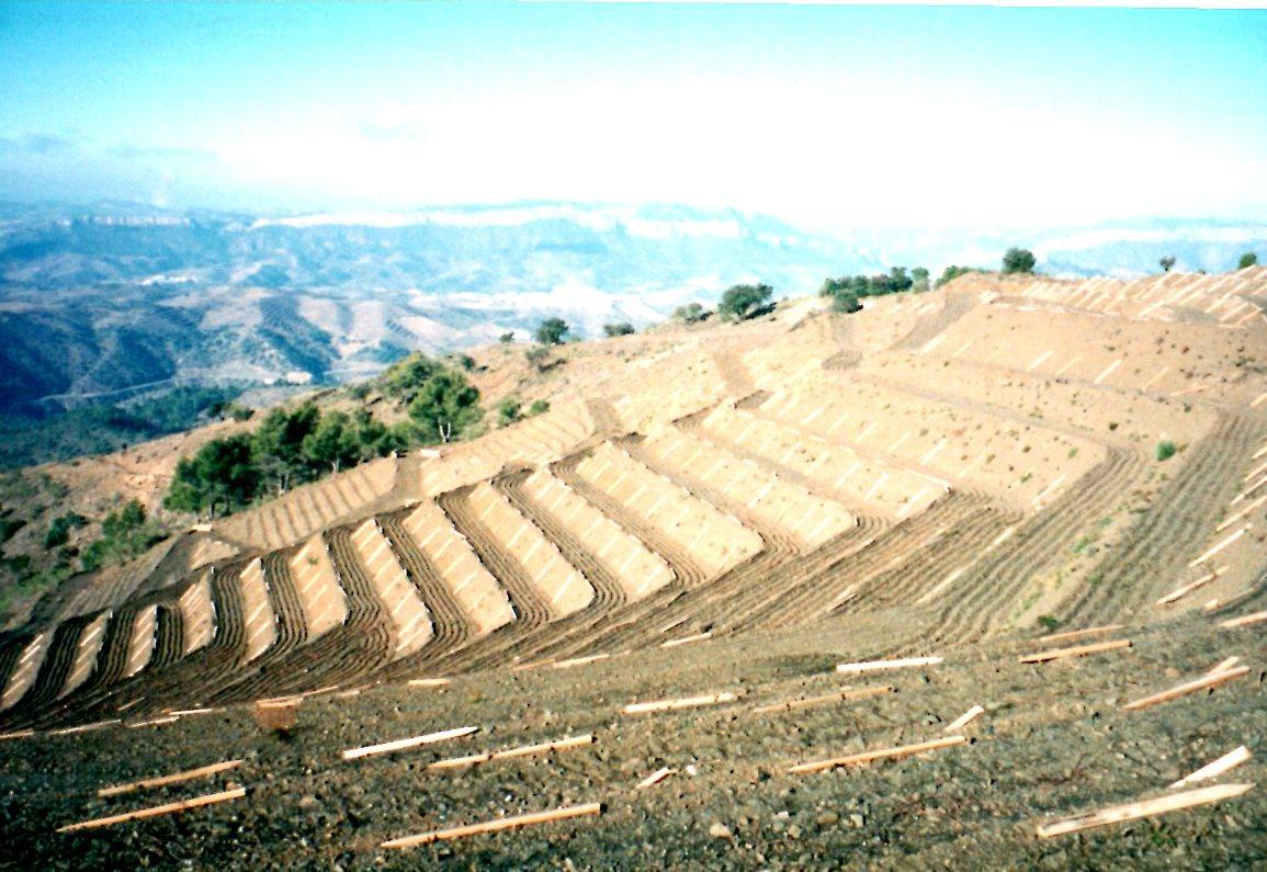 New vineyards in priorat.jpg