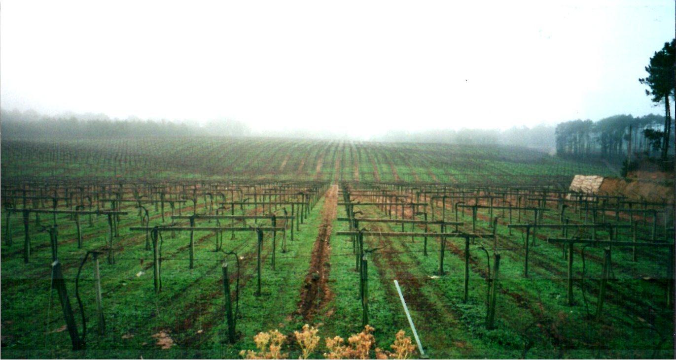 Trelassing Vines.jpg