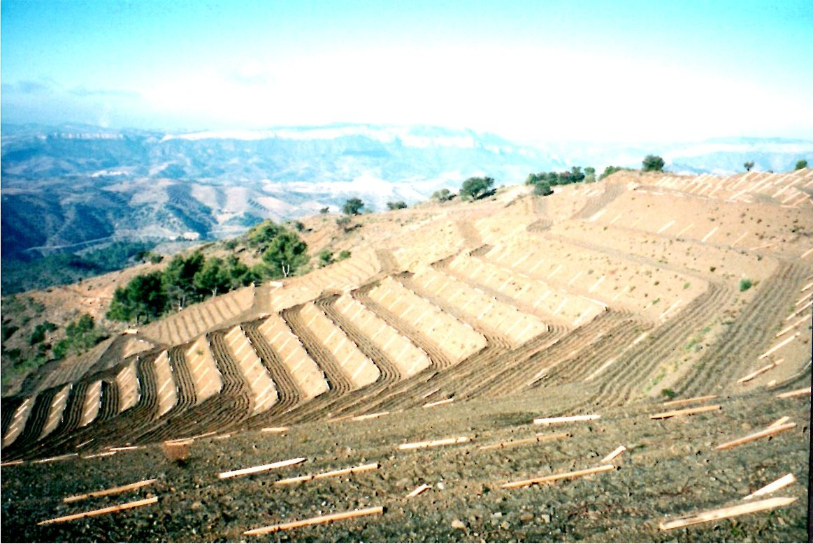 New vineyards Gran Clos martinet Priorat.jpg