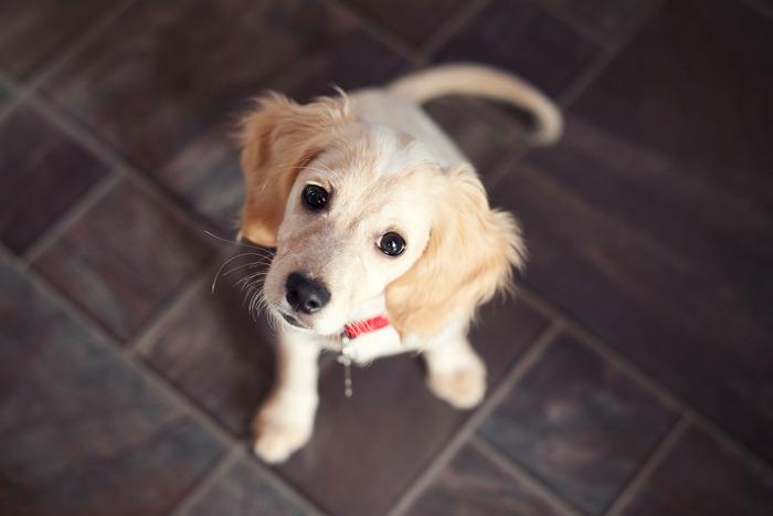 25-rescue-dog-lede.w700.h467.jpg