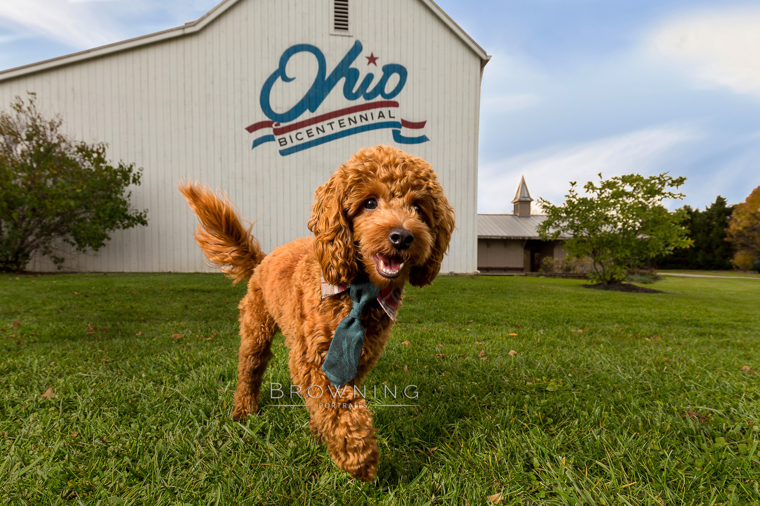 best columbus ohio pet portraits