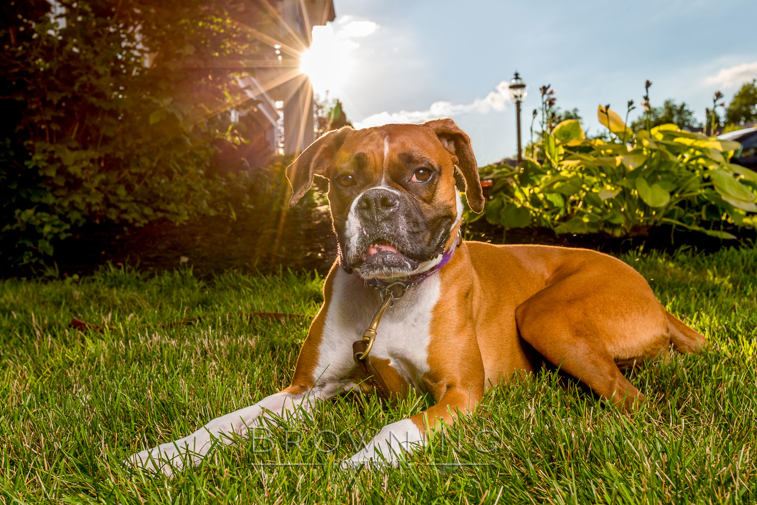 best dog photography columbus ohio