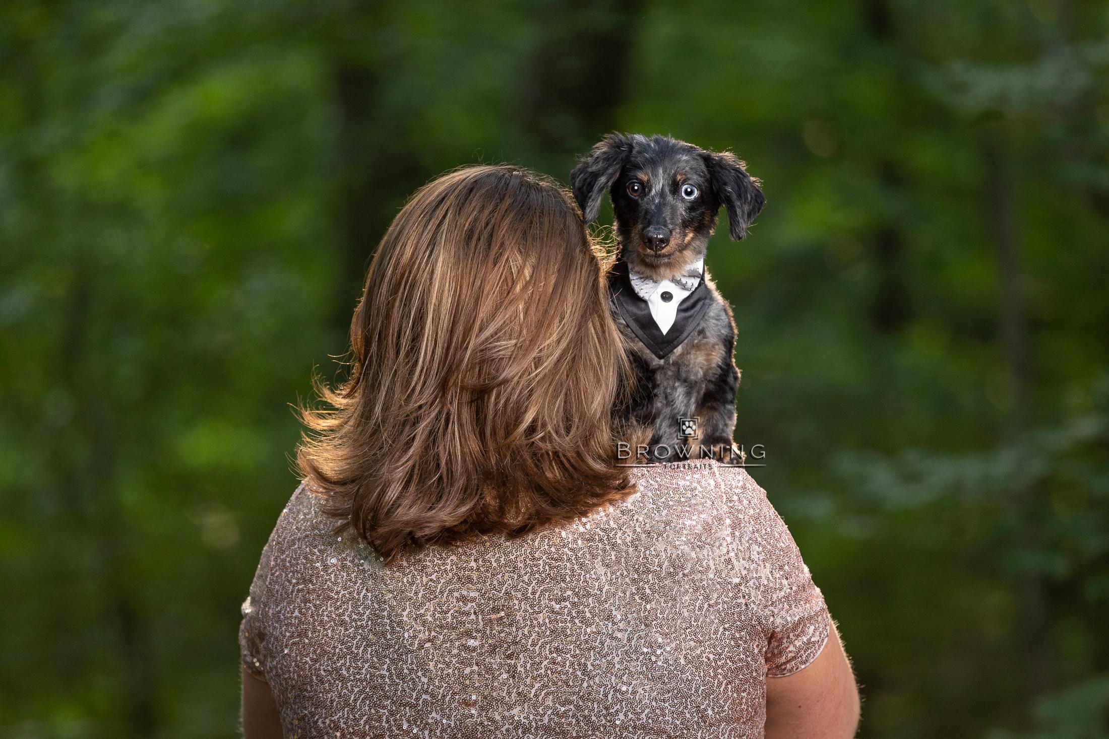 senior-dachshund-tuxedo-1