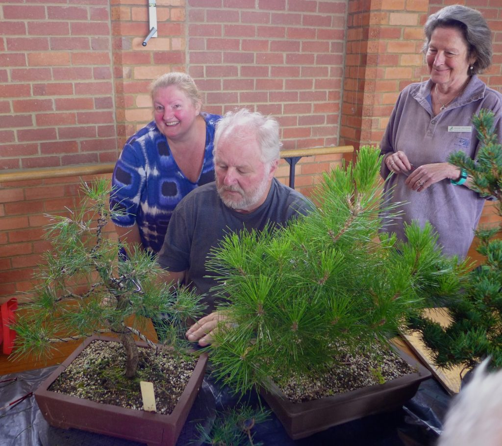 Plenty of attention and treatment for a Pine.