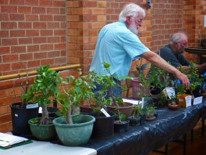 Discussion on many fig varieties.