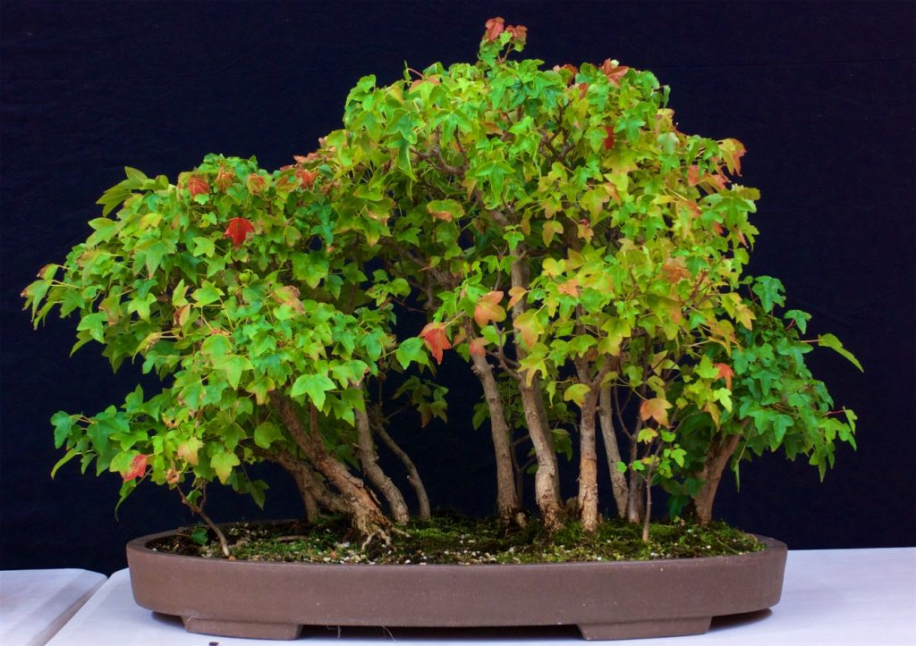 Trident Maple Group