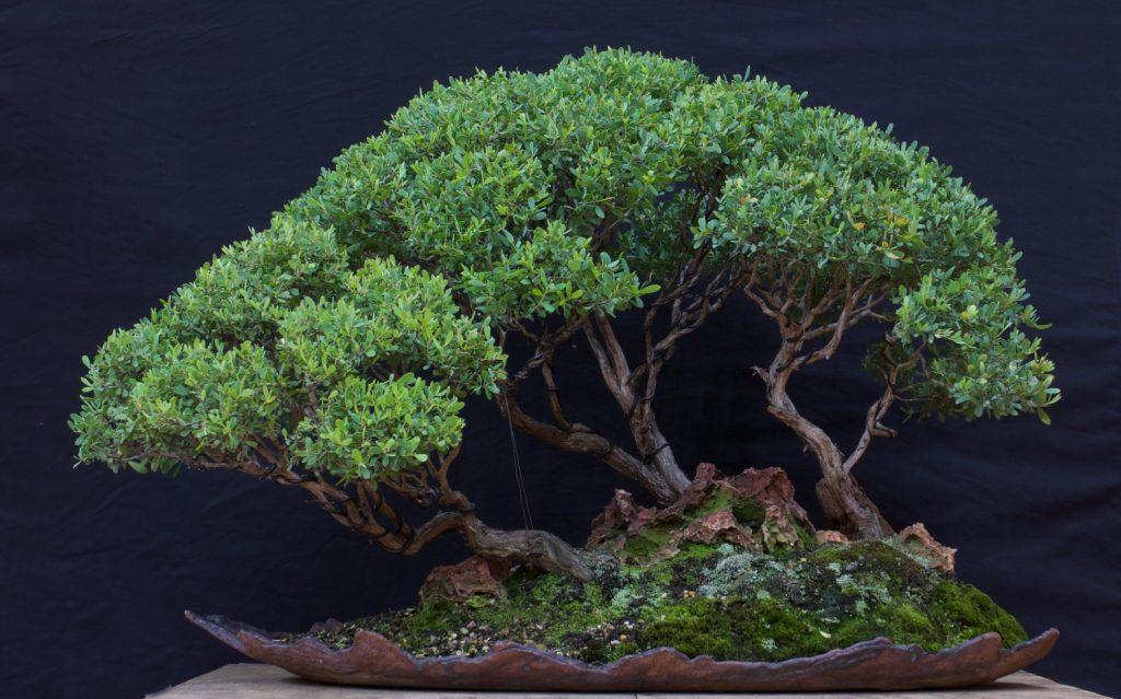 Tea Tree Group