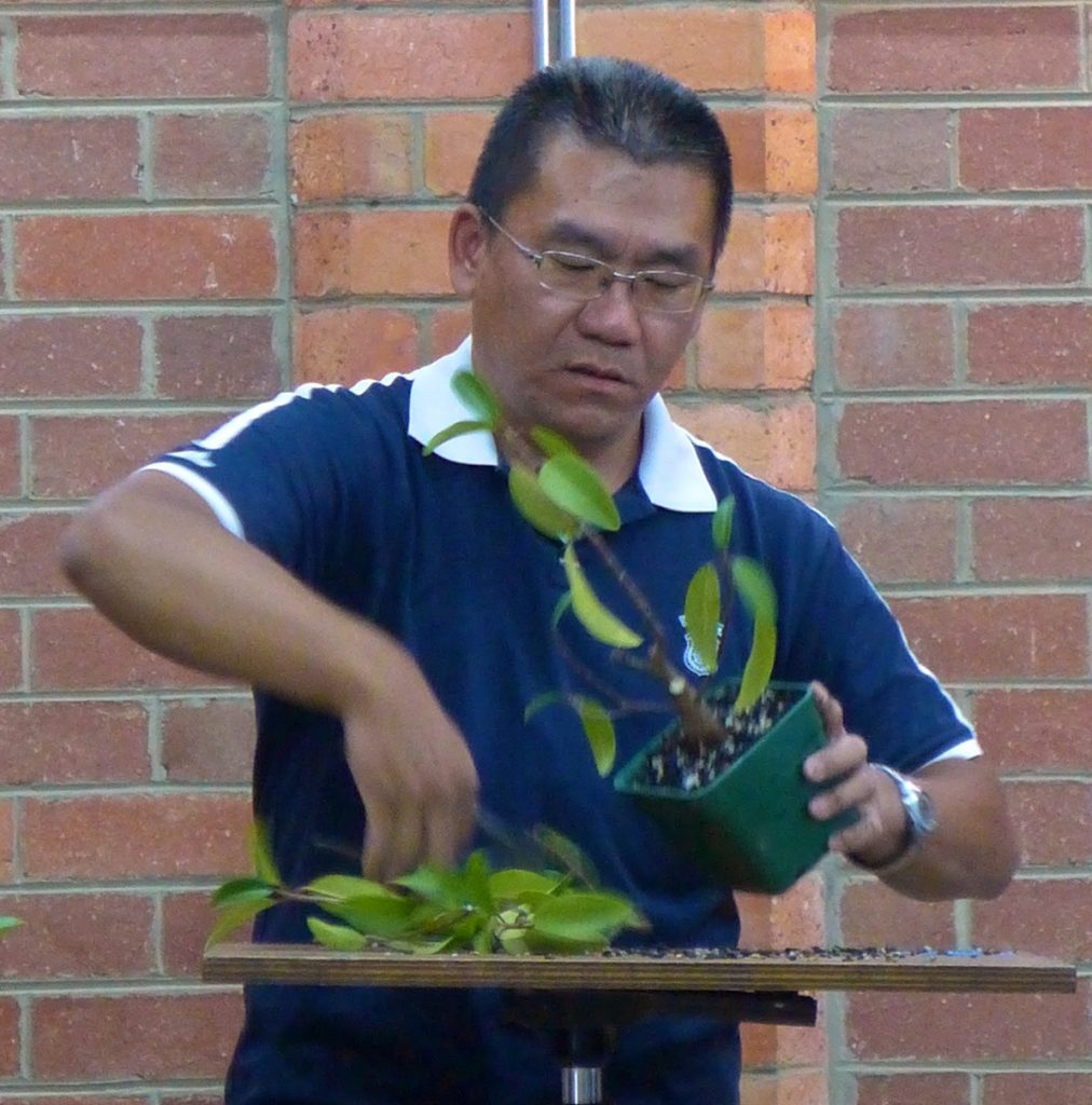 Tien trimming a fig