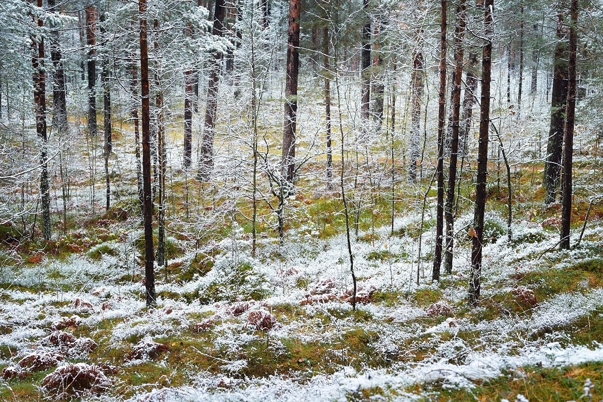 www.alexstemmer.com_blog_2016_first_snow7.jpg