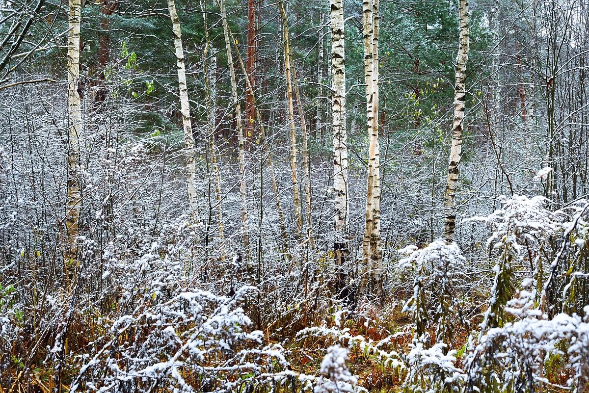 www.alexstemmer.com_blog_2016_first_snow12.jpg