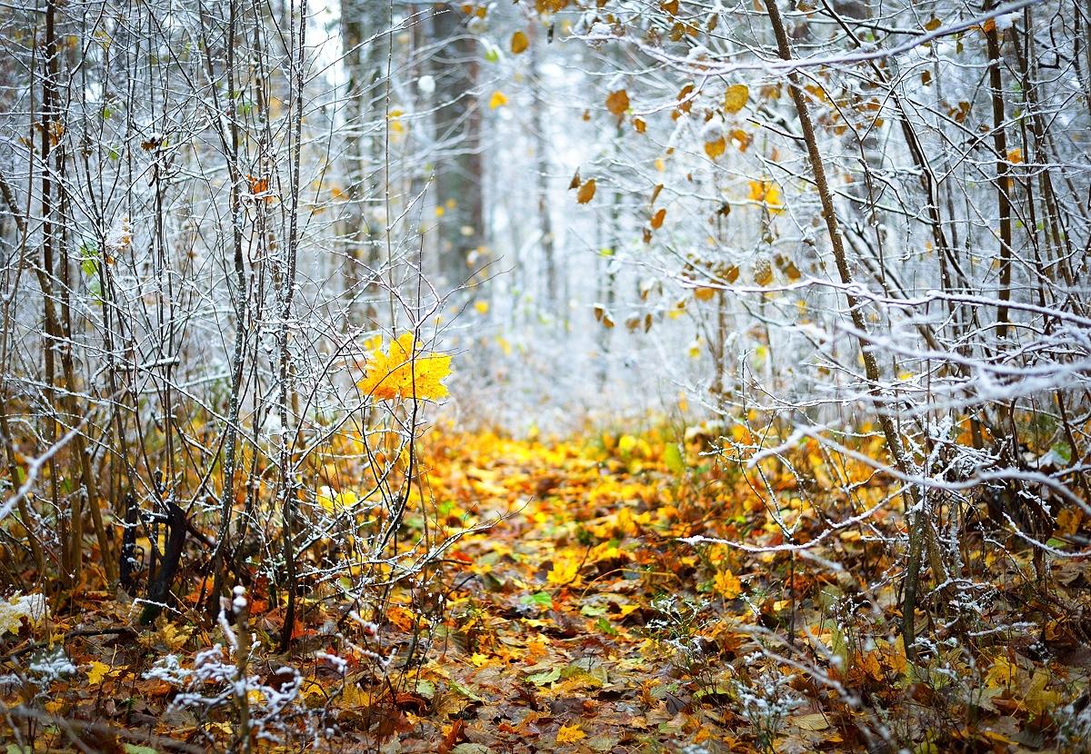 www.alexstemmer.com_blog_2016_first_snow16.jpg