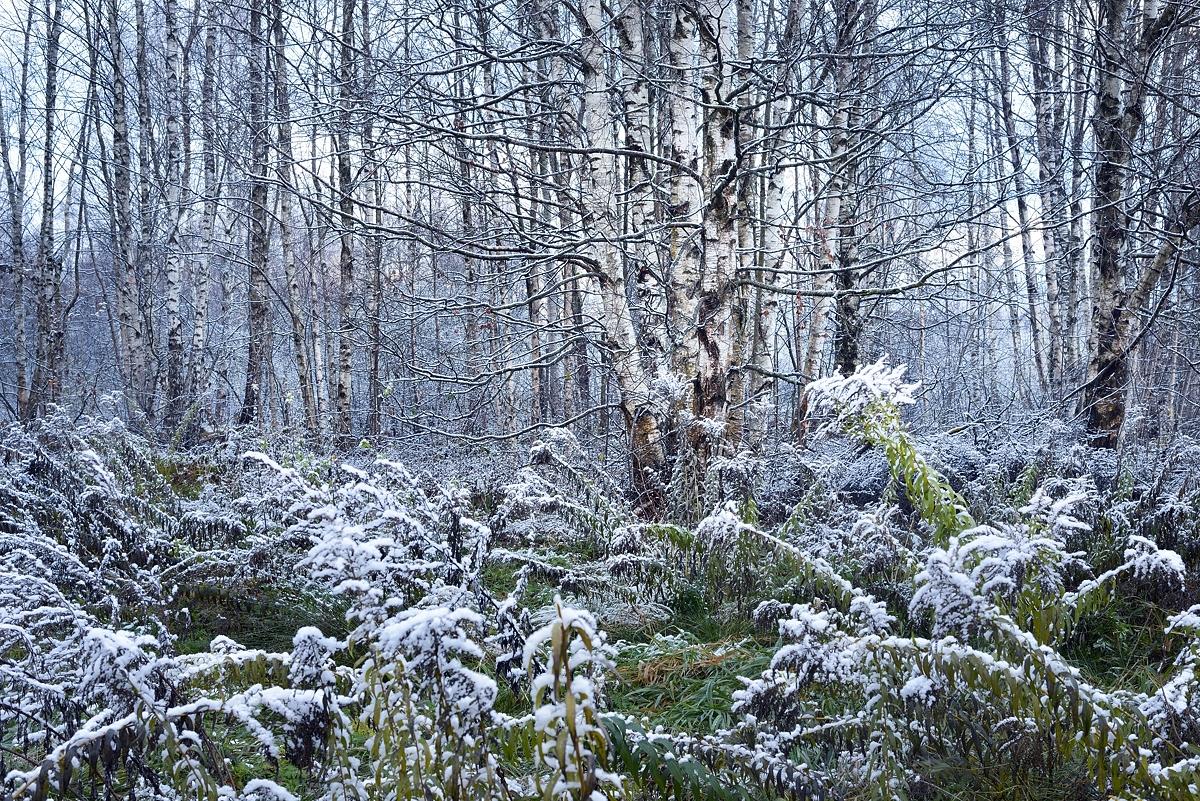 www.alexstemmer.com_blog_2016_first_snow18.jpg
