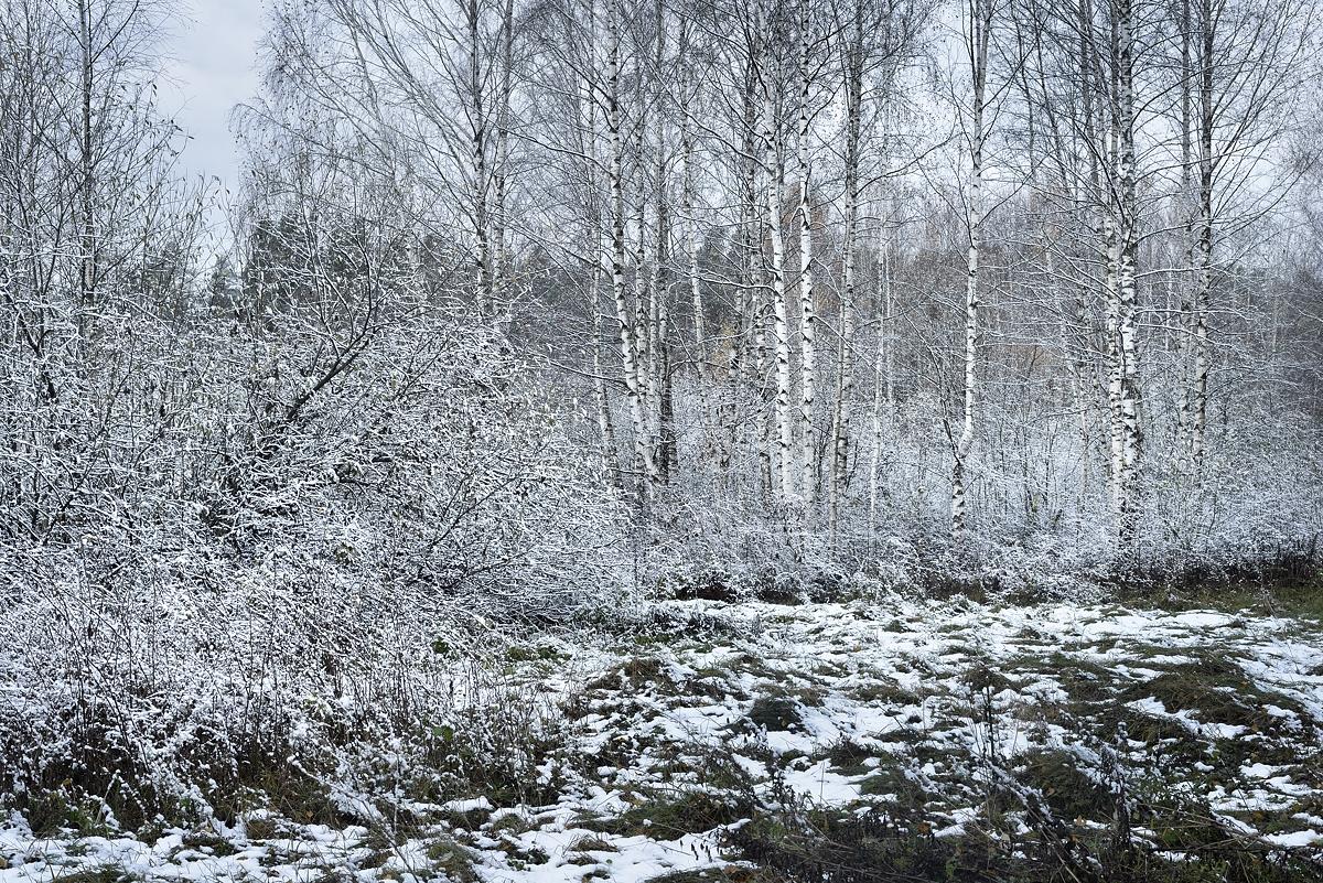 www.alexstemmer.com_blog_2016_first_snow20.jpg