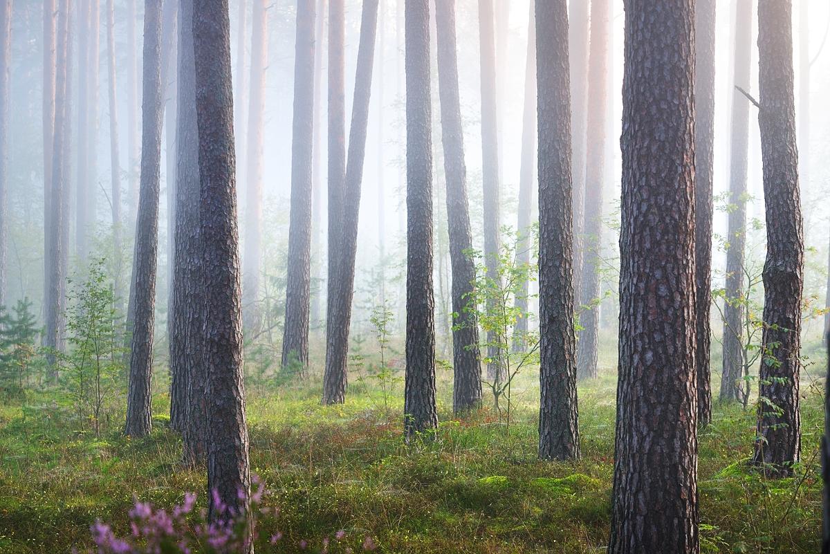 www.alexstemmer.com_blog_2016_forest_fog1.jpg