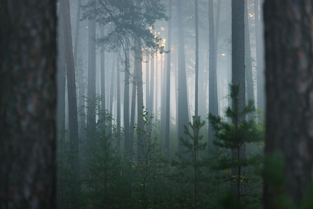 www.alexstemmer.com_blog_2016_forest_fog6.jpg