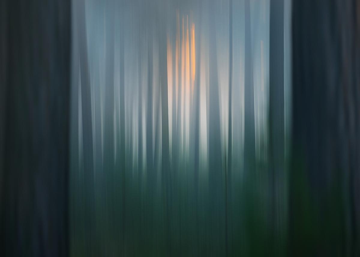 www.alexstemmer.com_blog_2016_forest_fog7.jpg