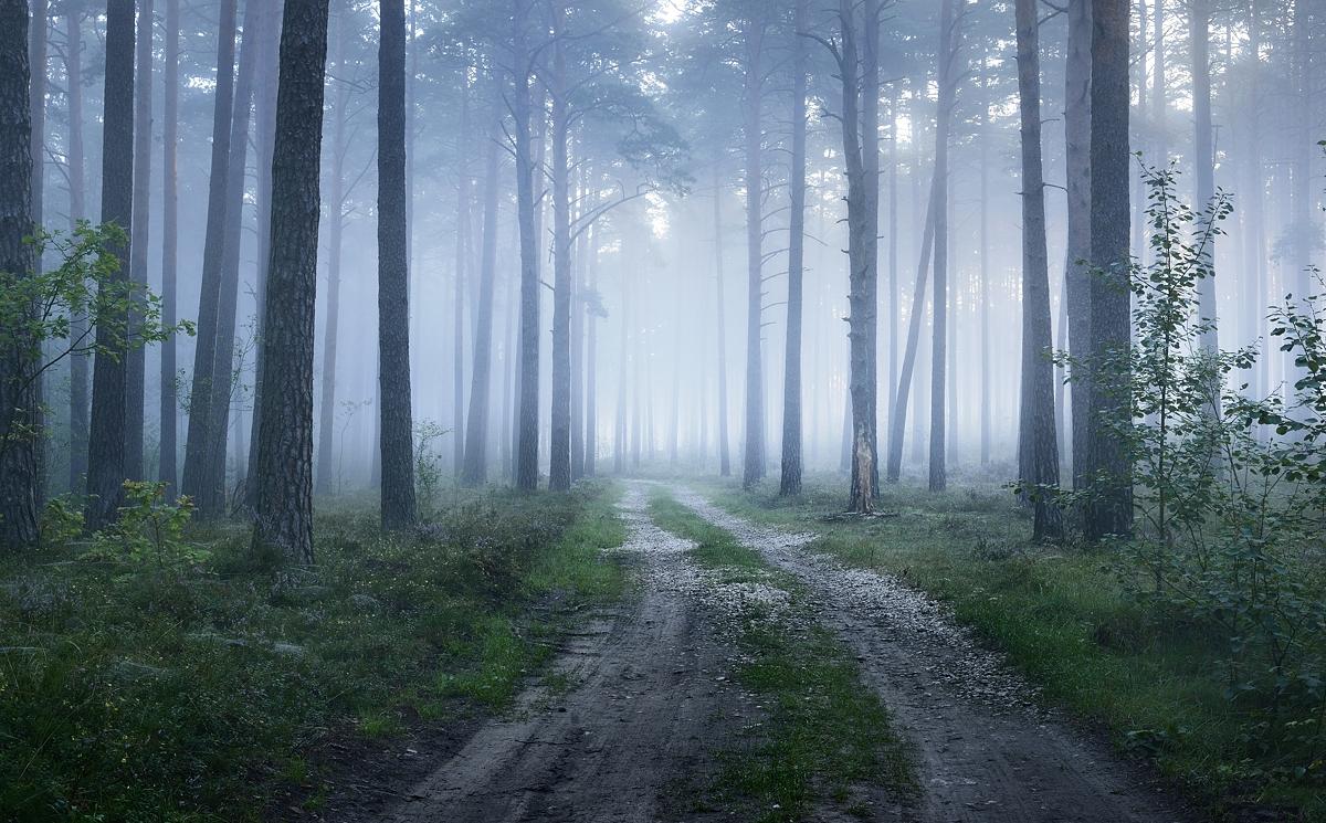 www.alexstemmer.com_blog_2016_forest_fog9.jpg