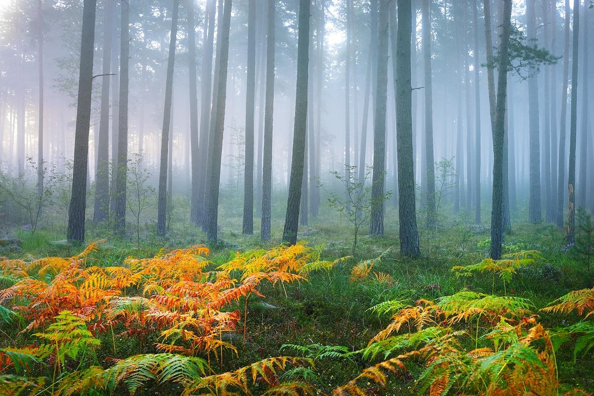 www.alexstemmer.com_blog_2016_forest_fog8.jpg