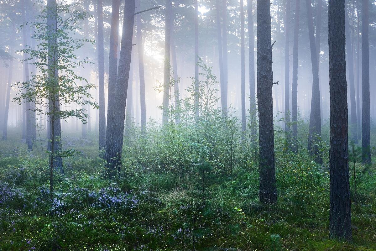 www.alexstemmer.com_blog_2016_forest_fog10.jpg