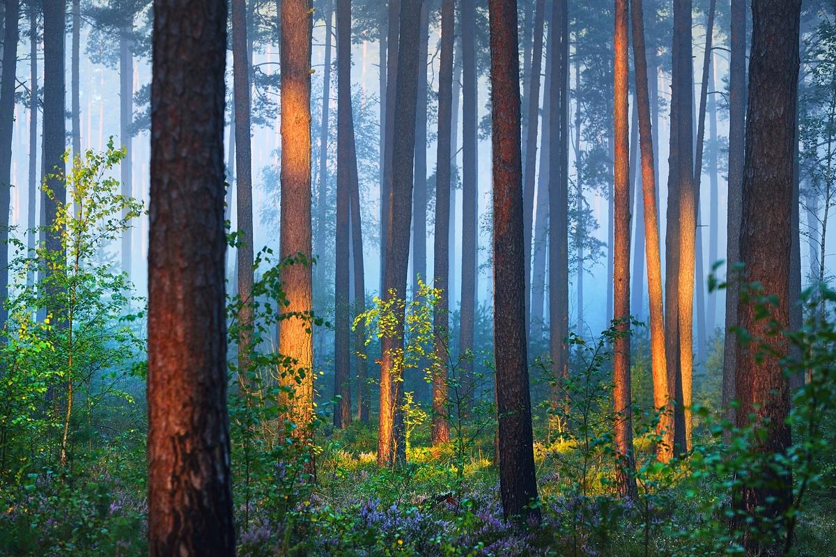www.alexstemmer.com_blog_2016_forest_fog12.jpg
