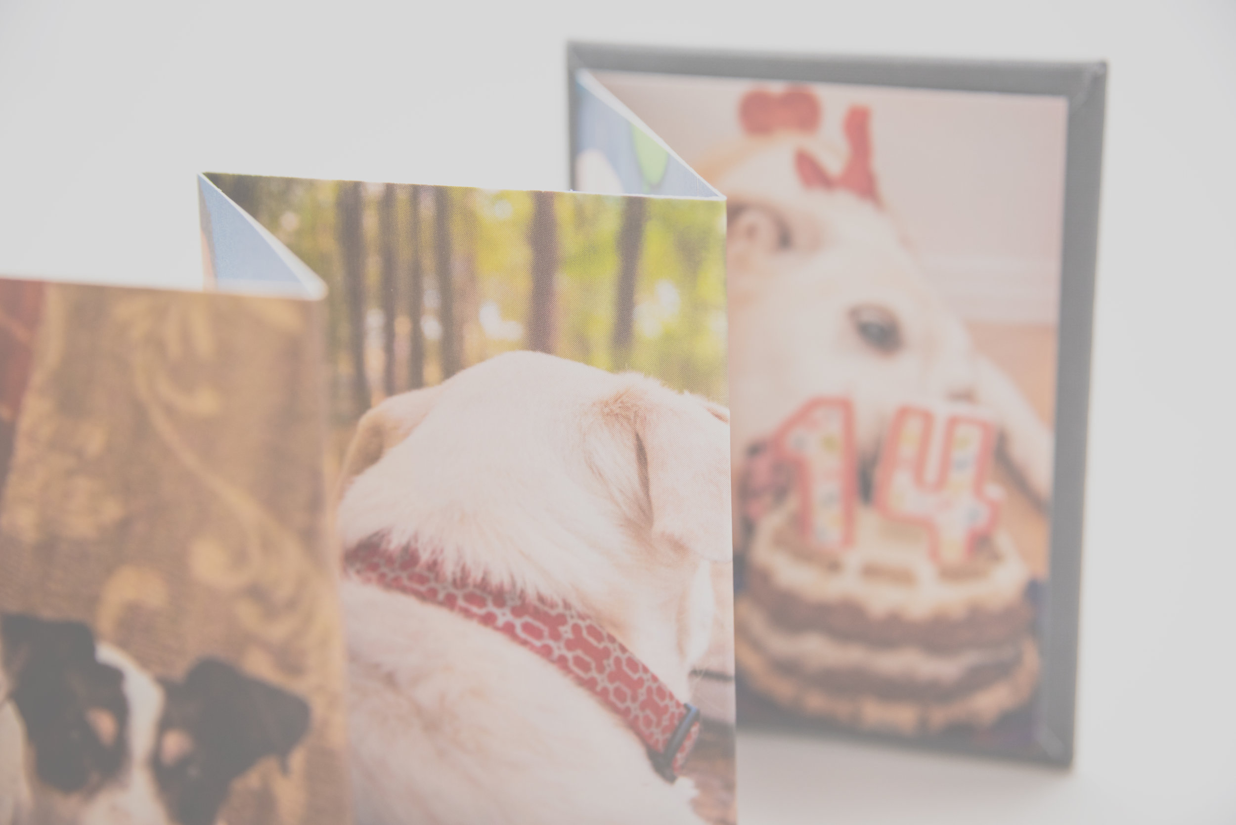 Gift prints and more… - We offer accordion books and more wonderful ways to show off your loved ones! Gift prints starting at only $49. Digital negatives starting at $100.