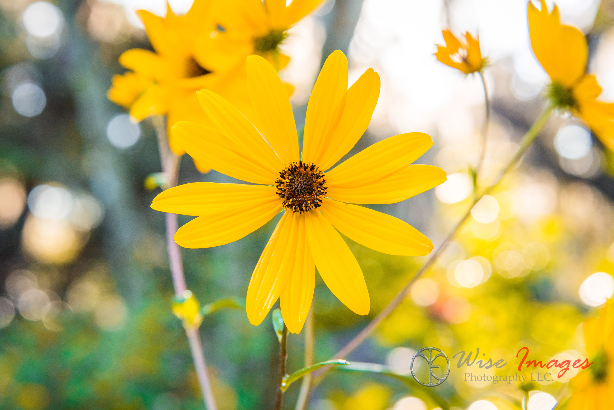 Sunshine in a Flower - De Leon Springs State Park; De Leon Springs, FloridaThis beautiful imagery brings a smile to my face!Open Edition
