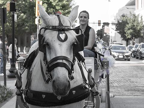 Carriage-Horse01-480-360.jpg
