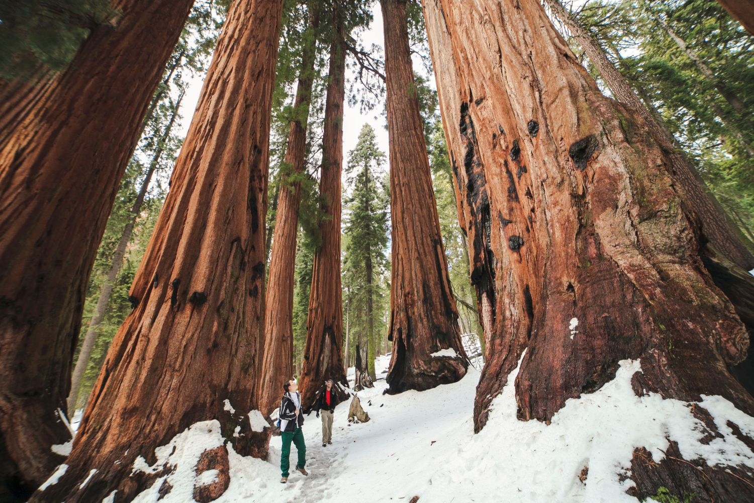 couple-elopement-sequoia-national-park