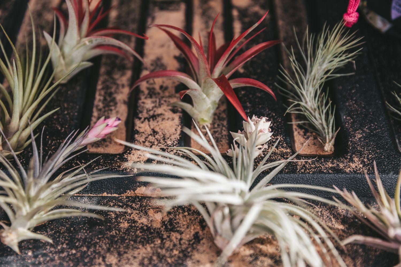 desert-flower-boutineer