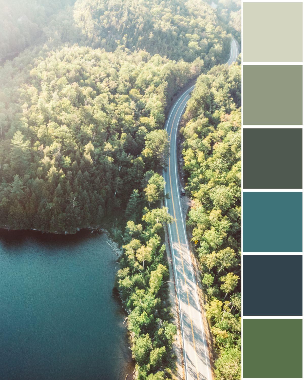 forest-tree-palette.jpg