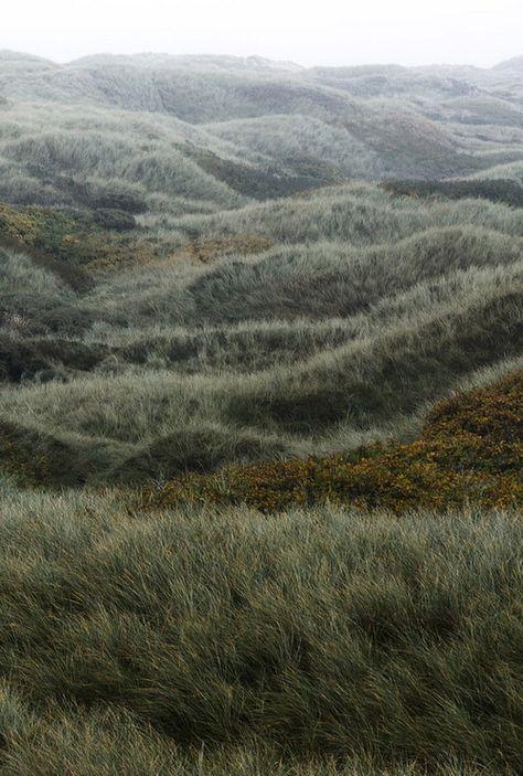f540f06b9207e901ab0a08d9445617d4--grass-texture-denmark.jpg