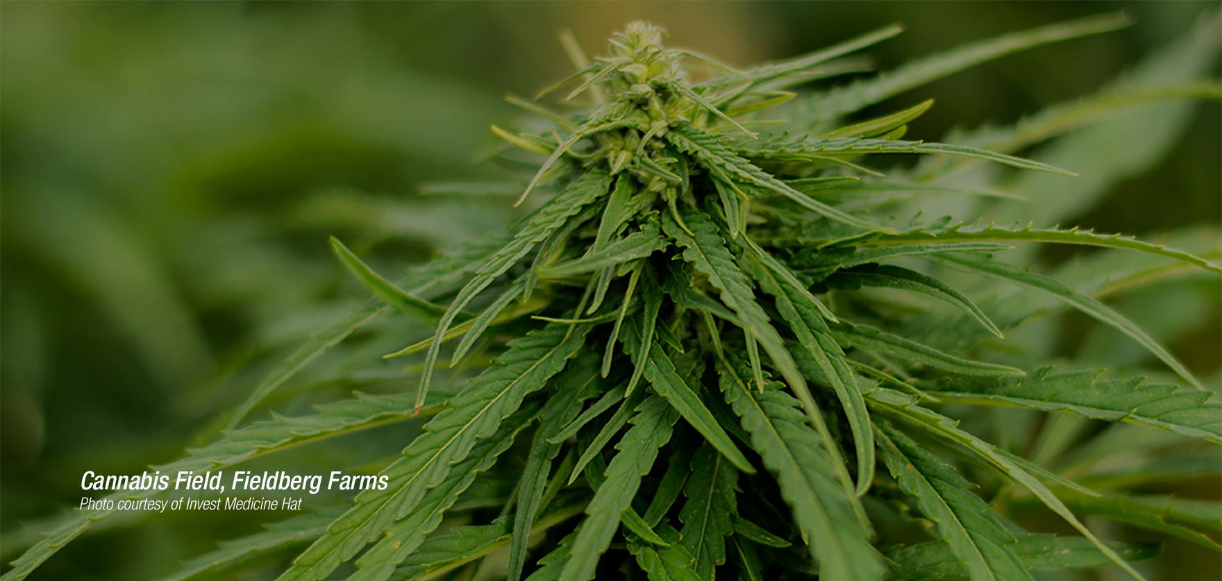 Regional_Cannabis.jpg