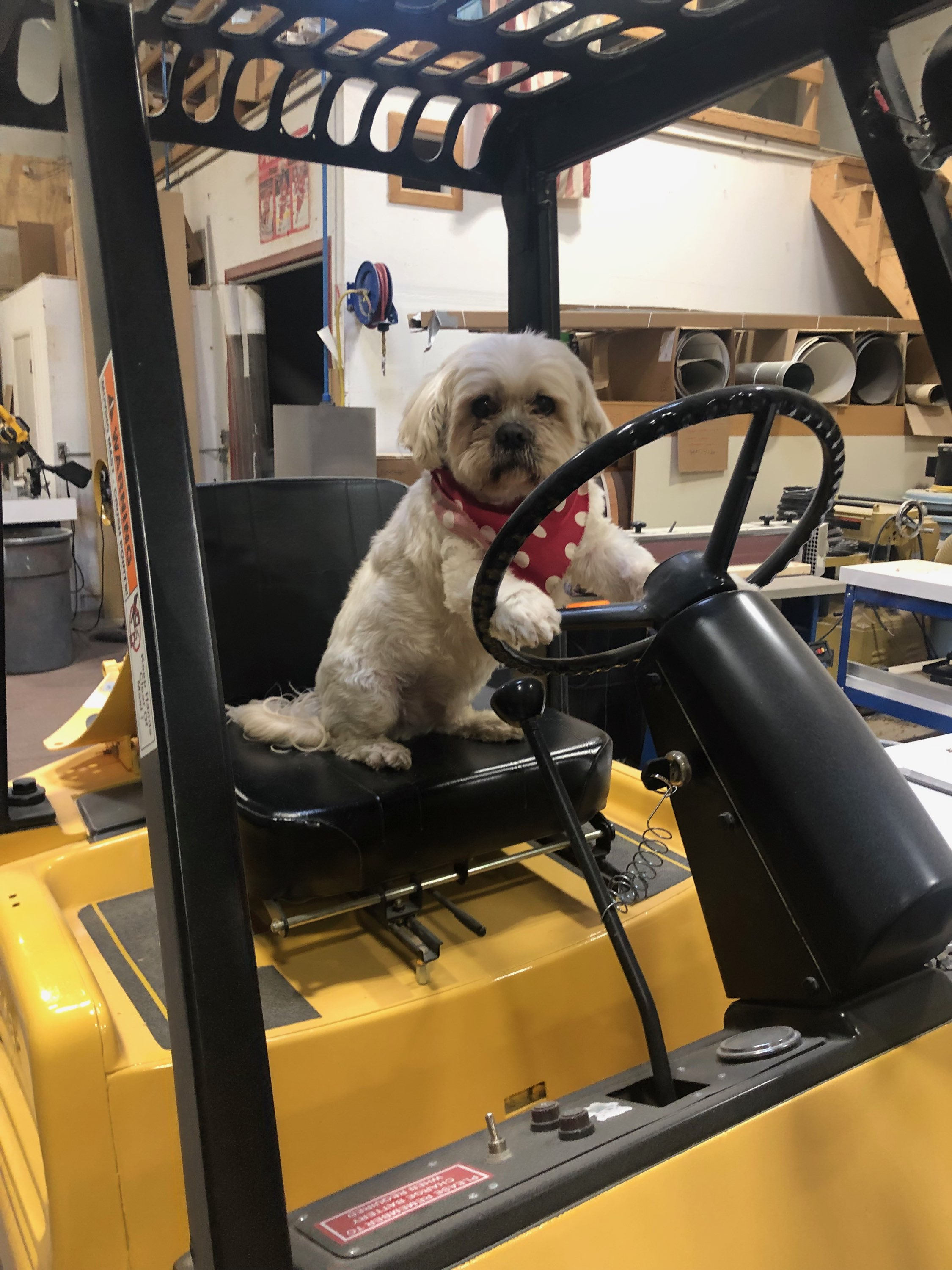 - Francis, our shop-dog, says it's time for a new forklift! We tend to listen to Francis as he is the shop foreman. The team agreed and off we went, forklift shopping!