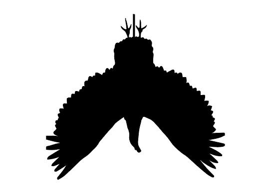 BDT+vulture.jpg