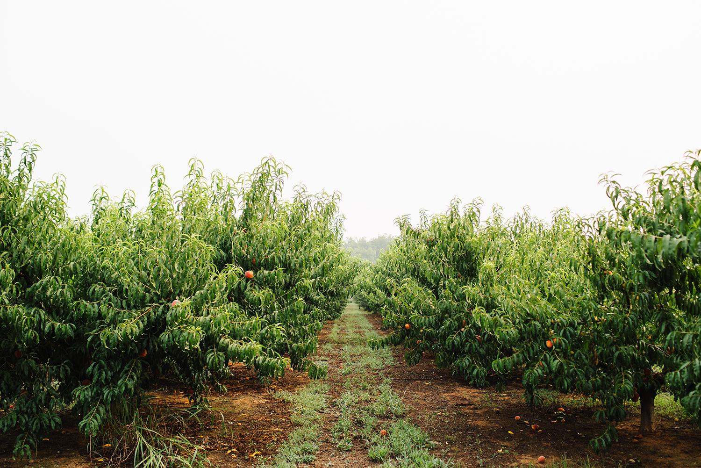 pearsonfarm_GACOI_FINAL_0001.jpg