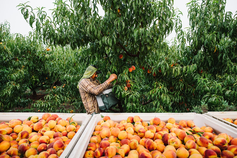 pearsonfarm_GACOI_FINAL_0003.jpg