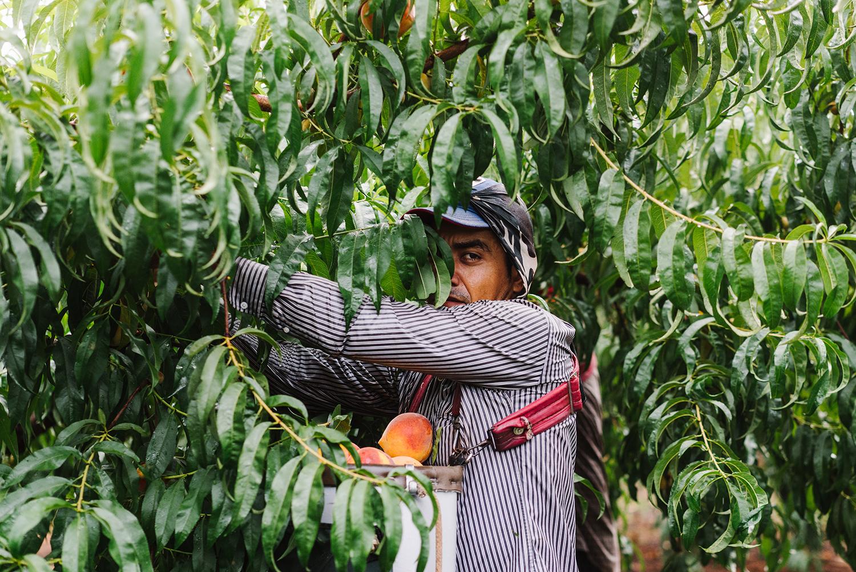 pearsonfarm_GACOI_FINAL_0010.jpg