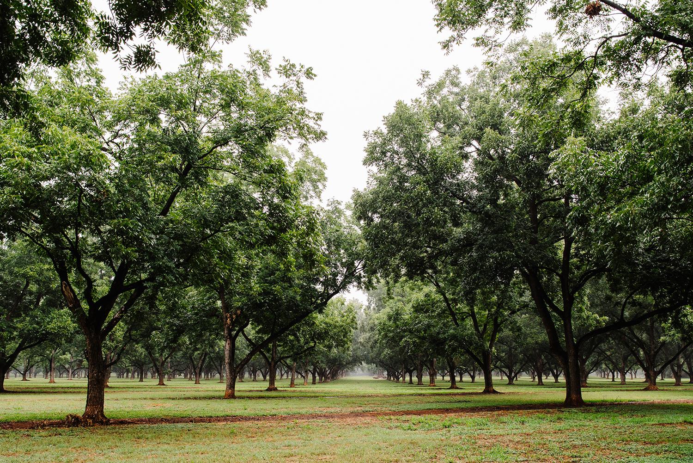 pearsonfarm_GACOI_FINAL_0027.jpg