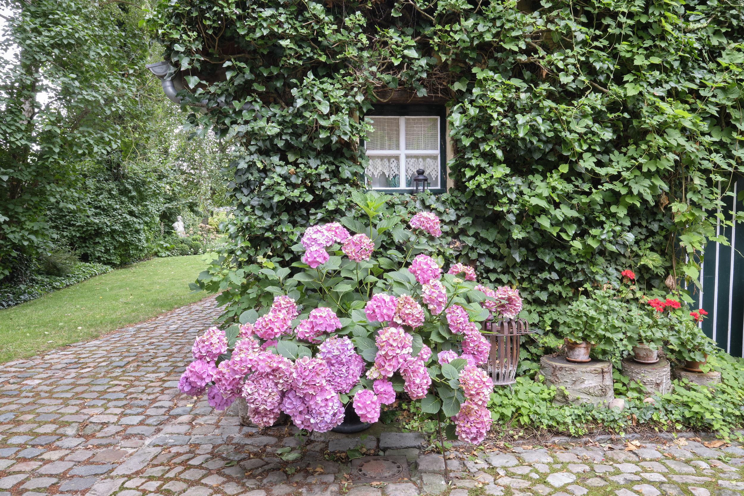 De tuin - Een niet alledaagse combinatie van een boomgaard met een rozentuin vormt het verlengstuk van 't Hof. De kersenbomen die zo typisch zijn voor de streek verzoenen zich in een haast perfecte harmonie met klassieke rozen die garant staan voor hun heerlijke geur