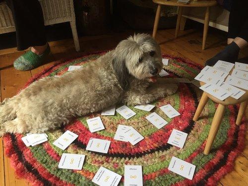 nvc-cards-dog (1).jpg