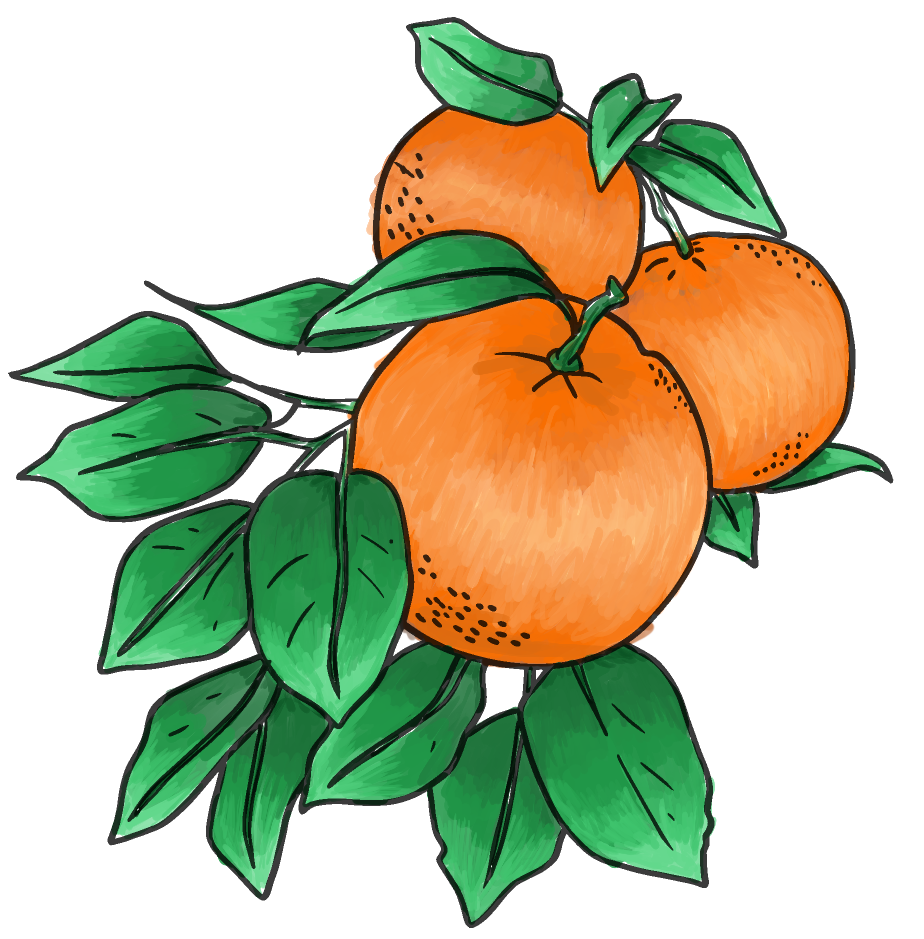 oranges-solo.png